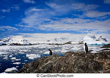 penguins in Antarctica - penguins on the stone coast of...