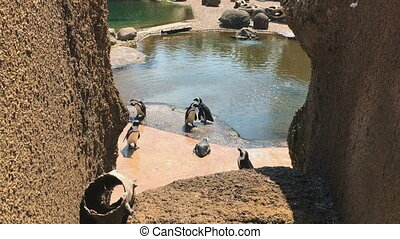 Penguins enjoy at summer sunny day by the water pool. -...