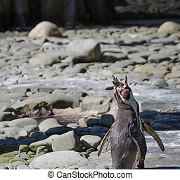 Penguins in ZOO Prag, Czech Republic
