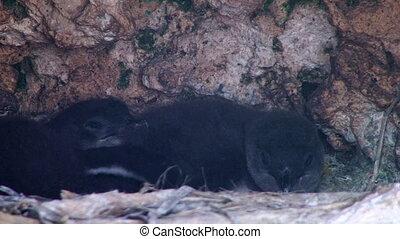 Penguins inside a cave - A medium shot of penguins inside a...