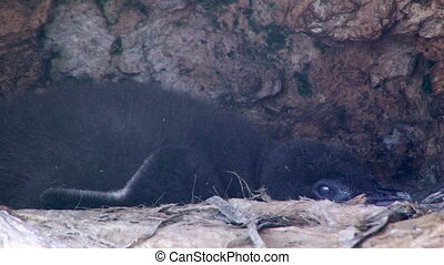 Penguins inside a cave - A medium shot of penguins inside a...