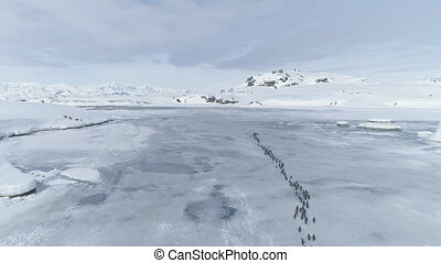 Penguins migration through Antarctica peninsula.