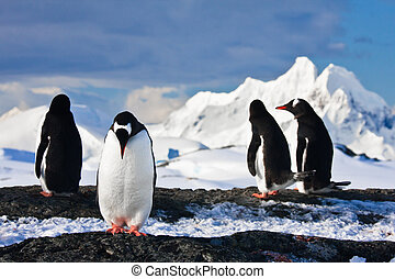 penguins on a rock in Antarctica - penguins dreaming sitting...