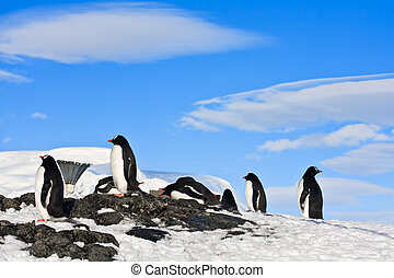 penguins on a rock - penguins dreaming sitting on a rock,...