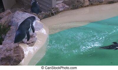 Penguins on aquarium - A birds eye view shot of penguins on...