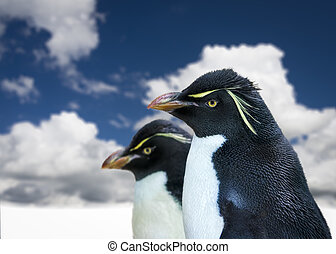 Pair of penguins in profile on an icy landscape
