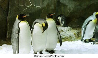 Penguins standing next to the rocks