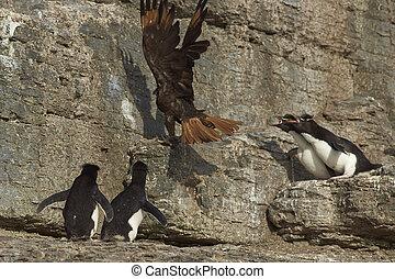 Penguins vanquish a Caracara