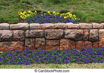 pensée, alto, parterre fleurs, drapeau tricolore