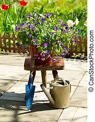 pensée, fleurs, jardin