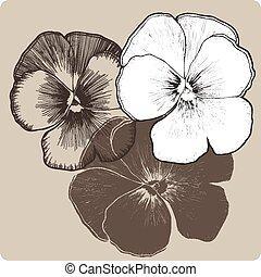 pensée, hand-drawing., vecteur, fleur, illustration.