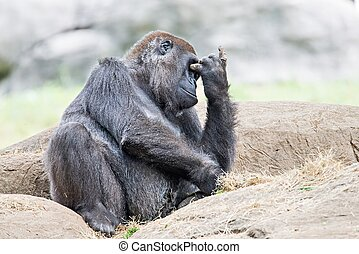 pensamiento, gorila, roca, sentado