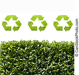 pensare, verde, ecologia, concetto