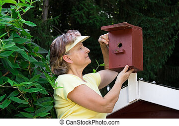 Pensioner with a nest box - Pensioner looking in a nest box
