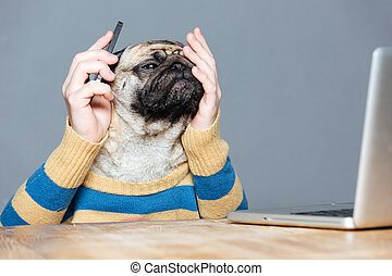 Pensive desperate pug dog with man hands using smartphone