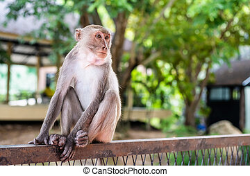 Pensive monkey sits on a tree branch In nature