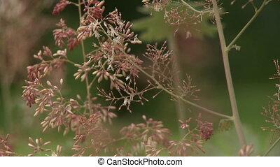Penstemon Flower Bulbs - Steady, close up shot of a...