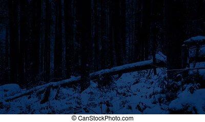 pente, dépassement, nuit, forêt, neigeux