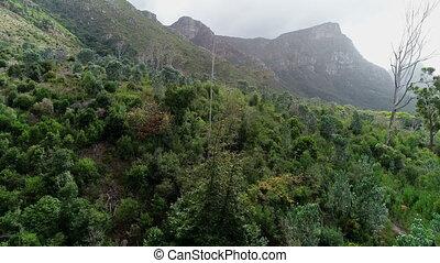pente, montagne, forêt verte, 4k