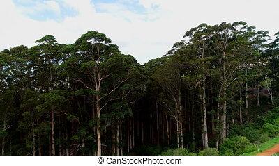 pente, montagne, vert, 4k, arbres