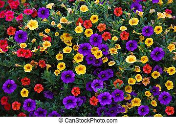 Petunias Background