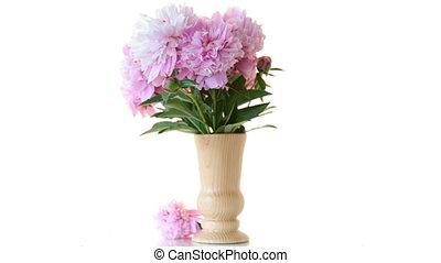 peonies, букет, белый, задний план, blooming