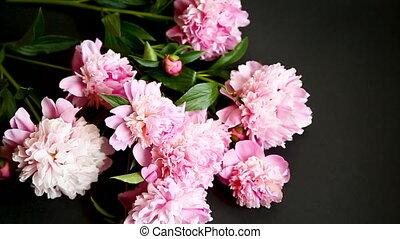 peonies, букет, черный, задний план, blooming