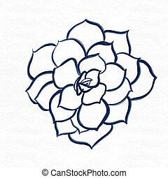 peonies flower hand drawn on textured background