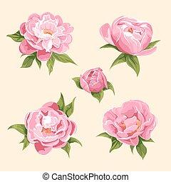 peonies - floral background of bright peonies