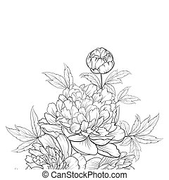 Peonies ink background.