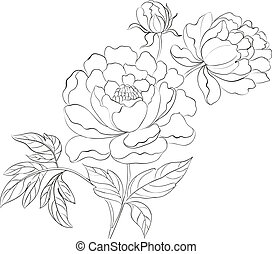Peonies ink background. Vector illustration.