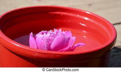 peony flower bowl