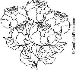 Peony rose bouquet. Liner vector illustration on white