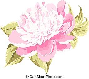 Peony spring flower.
