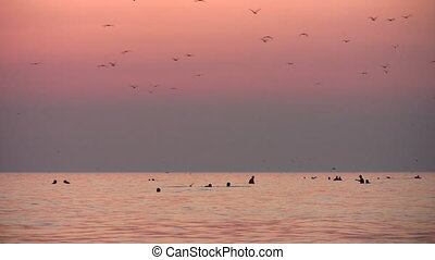 people and birds silhouette on sunset sea