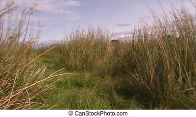 People and grassy plains - A medium shot of rocks and a...