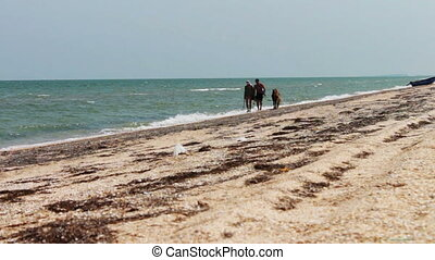 People and ponies, horse, go on seashore on the beach of the sea.