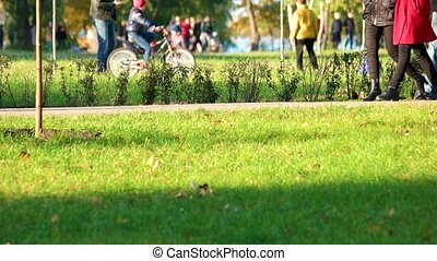 People are walking in the park in holidays.