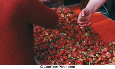 People Choose Strawberries on the Grocery Market. Counter...