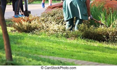 People digging in garden. Gardering in public park. Janitors...