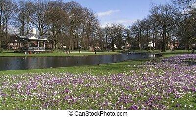 people enjoying spring in park