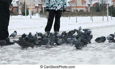 People feeding big flock of pigeons in park