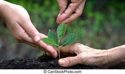 People hands take care of young plant tree sprout.
