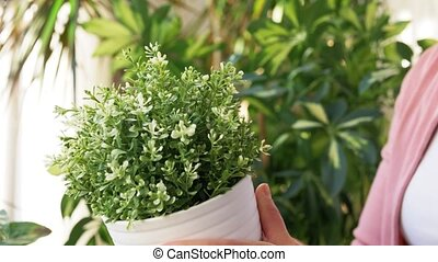 senior woman takes care of houseplants at home - people, ...