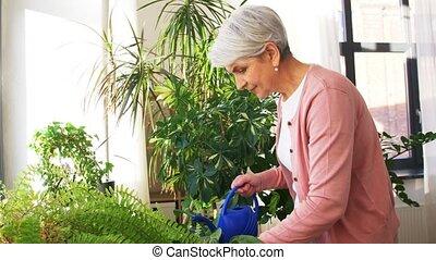 senior woman watering houseplants at home - people, ...