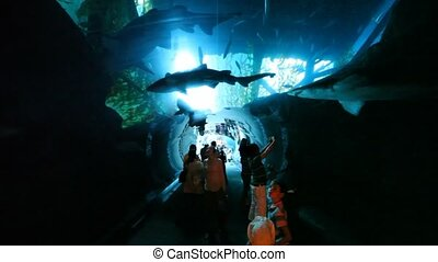 people in oceanarium with sharks swimmimg over them