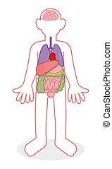 People internal organs
