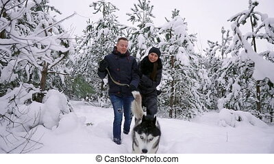 People on a walk in the forest. A man and a Siberian Husky dog are pulling a sleigh with a child in the snow in the forest. A woman is walking in the forest