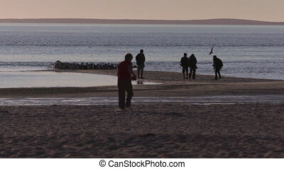 People on the beach with birds
