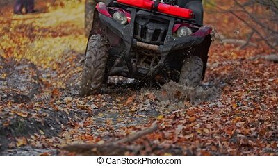 People riding atv in the autumn forest on the muddy track. Mid shot